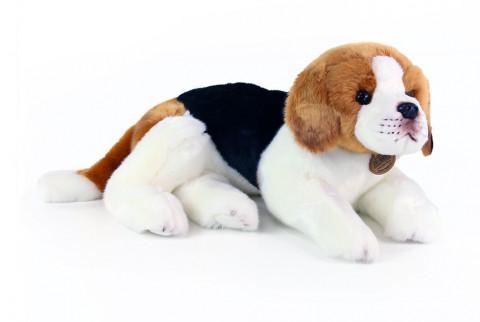 pes bígl ležící 38 cm